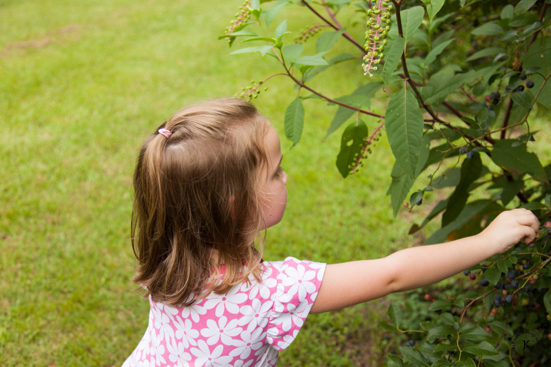 Amelia Picking Blueberries