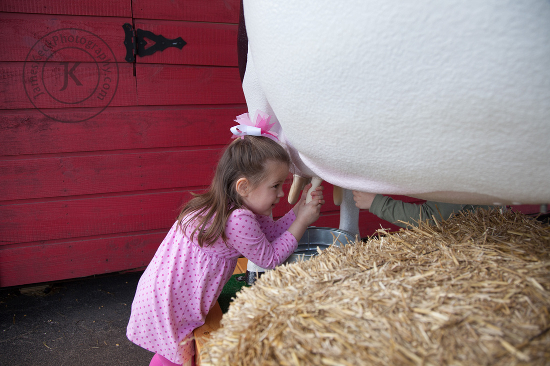 Houston Rodeo Portrait Milking Cow