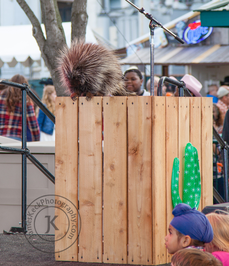Porcupine at Houston Rodeo
