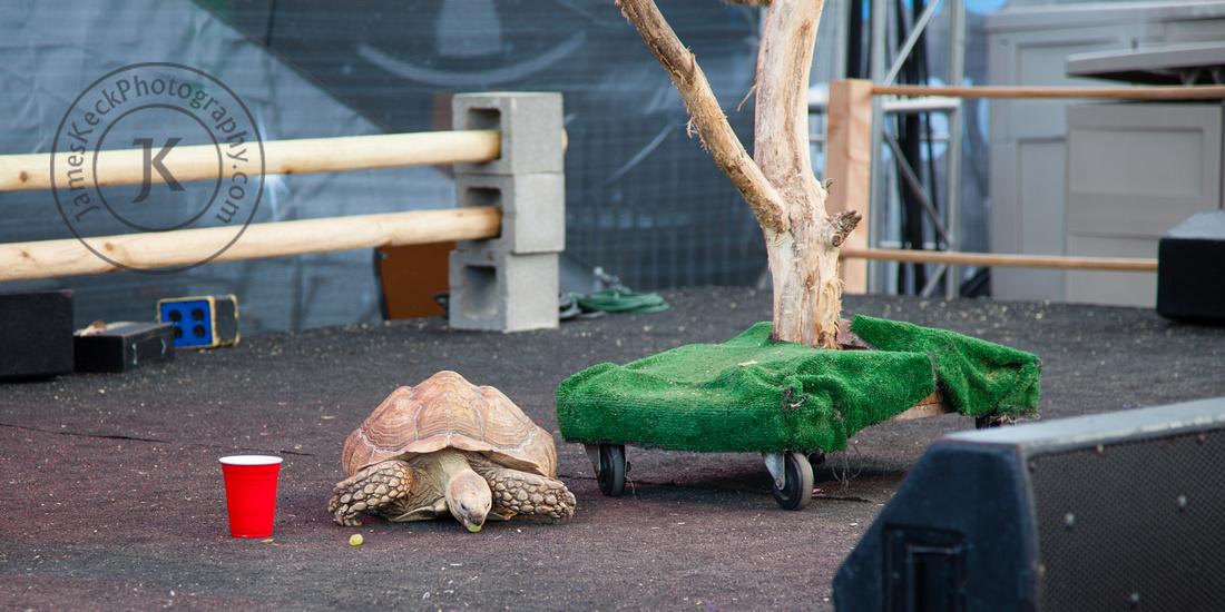 Tortoise at Houston Rodeo