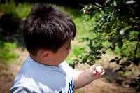 William Picking Blueberries