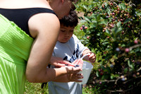 Amy and William Picking Blueberries