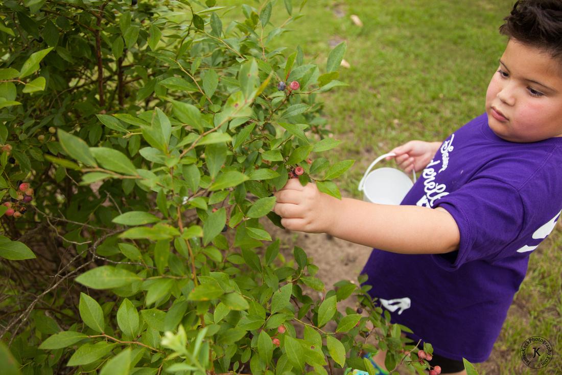 William Picking Blueberries