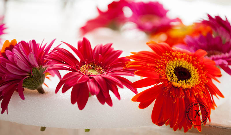 Children Portrait Photography, Gerbera Daisies, flowers, Houston, Flower Ring Setup