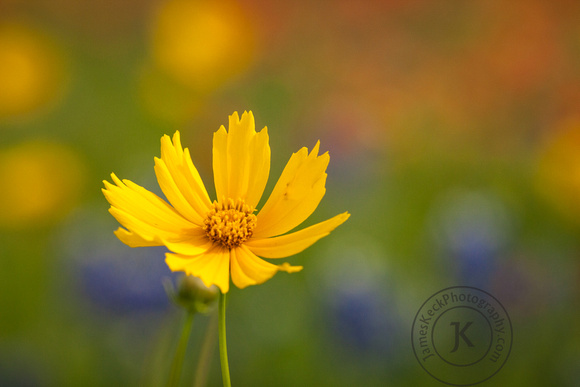 Portrait of Yellow Wildflower