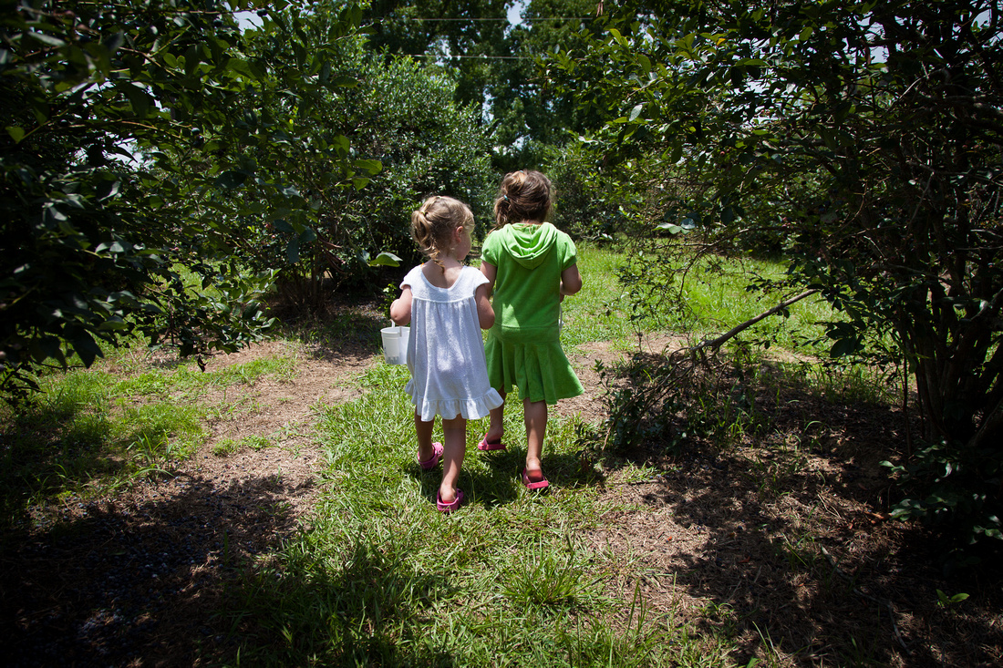 Audrey and Amelia Picking Blueberries