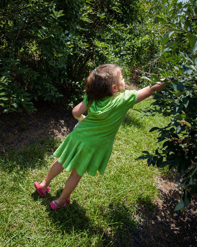 Audrey Picking Blueberries
