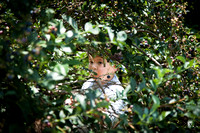 Photo of William through Blueberry Bush